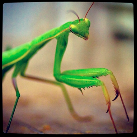When a Praying Mantis eats its spouse after mating it is not morally wrong; it is running its program, as strange as the program may seem to us.